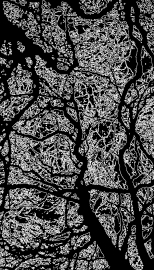 trees_edges_invert